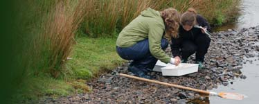 Searching for invertebrates in a mountain stream